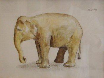 インド象.jpg