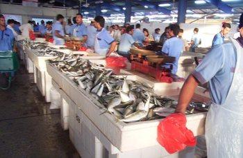 ドバイ魚市場2.jpg