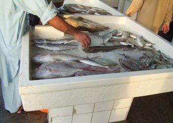 ドバイ魚市場3.jpg