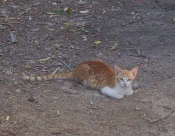 猫-牧場.jpg