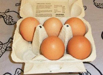 生食可の卵2.jpg